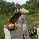 Gold Coast Regional Beekeepers