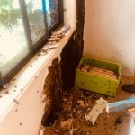Removing Hive From Wall
